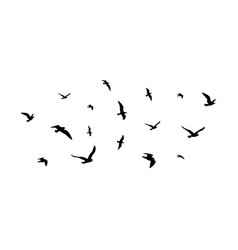 flying flock birds flight bird silhouettes vector image