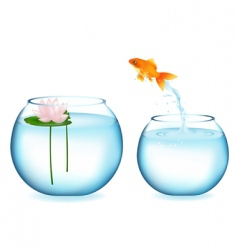 jumping goldfish vector image