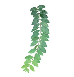 Leaf exotic complex vector