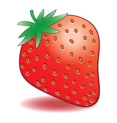 ripe strawberries on a white background vector image