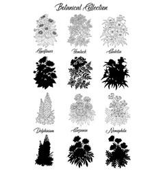 set black and white outline flowers -hemlock vector image