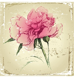 retro-styled hand drawn peony flower vector image vector image