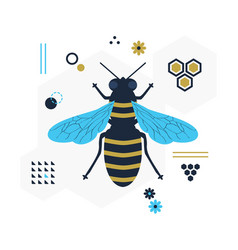 blue and golden top view flying honey bee icon vector image