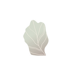 fantasy shrub or plant leaf vector image