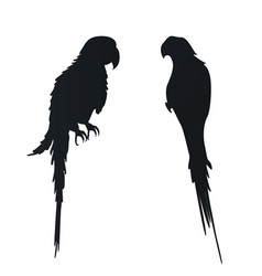 Flat with silhouettes parrots on vector