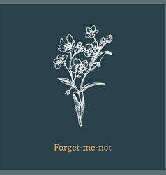 Forget me not on dark vector