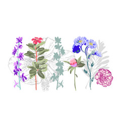 set of hand drawing botanical floral elements vector image