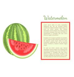Watermelon citron melon berry ripe tropical fruit vector