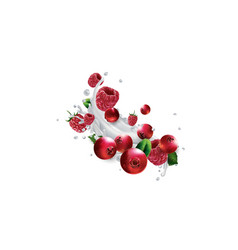 Cranberries and raspberries in splashes milk vector