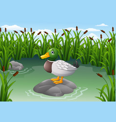 Cute duck on the rock vector