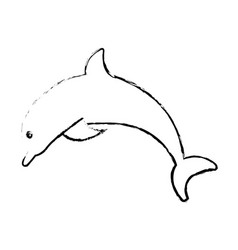 dolphin marine animal vector image