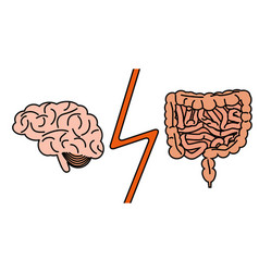 gut versus brain concept vector image