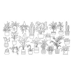outline drawings plants vector image