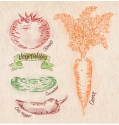 Vegetables carrot tomato chili peppers cucumber vector