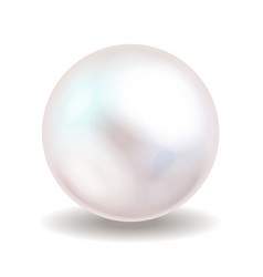 White pearl Sea pearl isolated on white vector