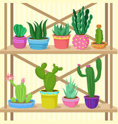 cactus and succulents home plants in pots on vector image