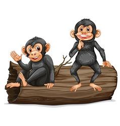 Chimpanzee vector