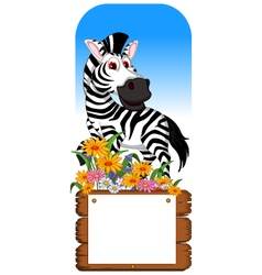 Funny zebra cartoon posing with blank board vector