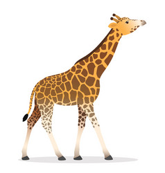 Giraffe walking flat african animal wildlife vector