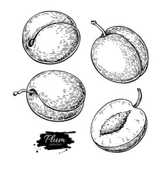 plum drawing set hand drawn fruit and vector image