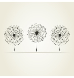 Three dandelions vector image
