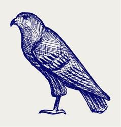 Hawk vector image vector image