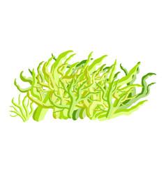 Algae symbol icon design beautiful isolated on vector