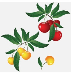 Cherry on branch vector