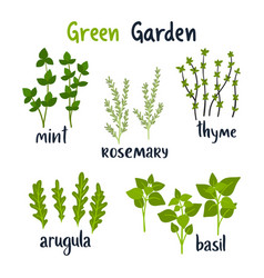 Set herbs with lettering green vector
