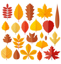 Set of tree autumn leaves isolated on the white vector