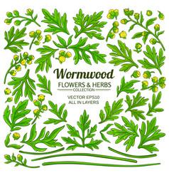 Wormwood plant elements set on white background vector