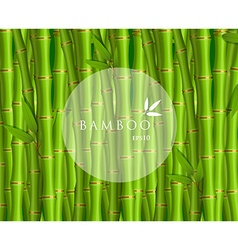 Background with green bamboo vector