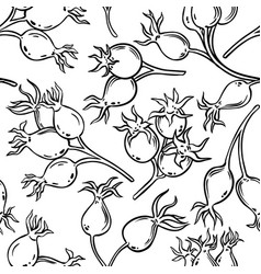 dog rose berries pattern vector image