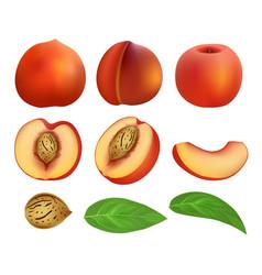 Peach slices fruit leaf mockup set realistic vector