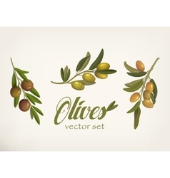 Set of green and yellow olive branches with leaves vector