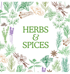 Spices and herbs sketch seasonings vector