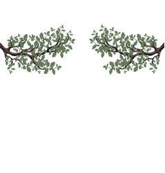 Two green branches oak with acorns on both vector