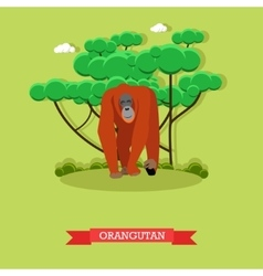 Wild orangutan in flat style vector