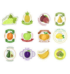 Fruit label fruity apple orange banana vector