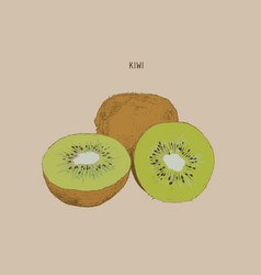 kiwi sketch vector image