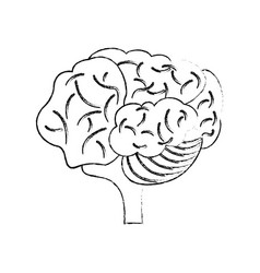 Sketch brain human creativity concept vector