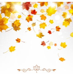 Autumn Falling Maple Leaves vector