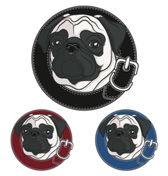 color image a pug wearing a collar vector image