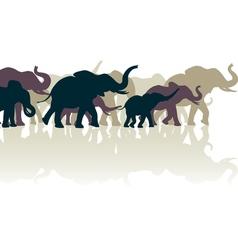 Elephant herd vector image