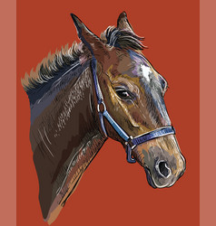 Hand drawing horse portrait 26 vector