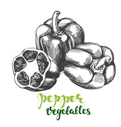 Peppers bell vegetable set hand drawn vector