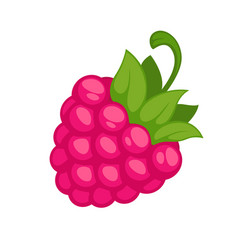 pink wild raspberry fruit with green stem isolated vector image vector image