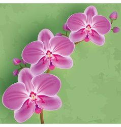 Floral vintage background green with flower orchid vector image vector image