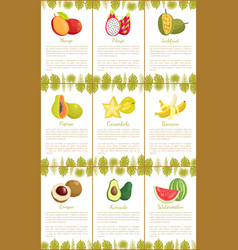 mango and pitaya carambola posters set vector image