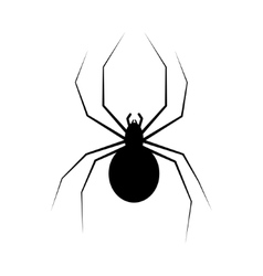 spider isolated on white vector image